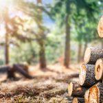 Bouwen met balken van vurenhout