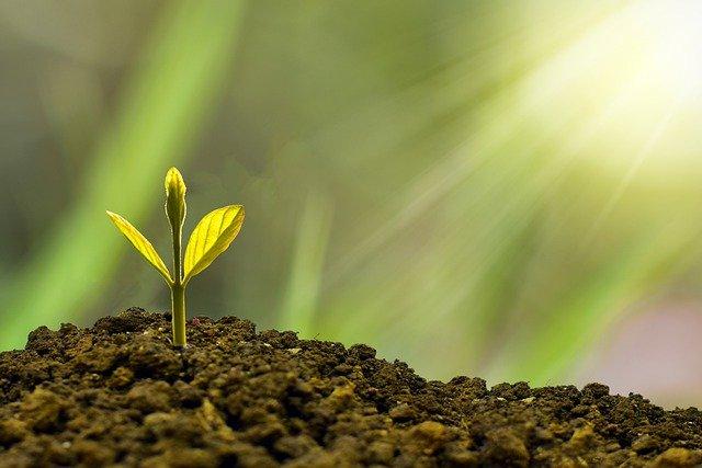 investeren in je tuin